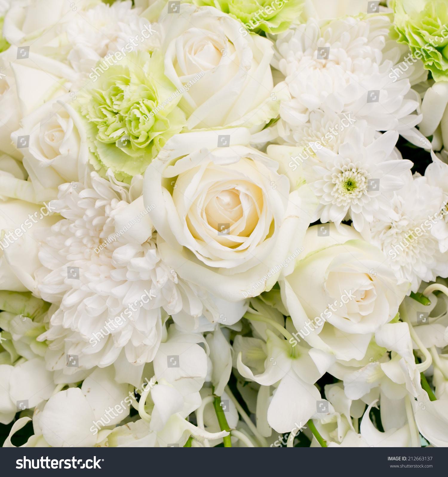 Big White Roses White Flowers Background Stock Photo Edit Now