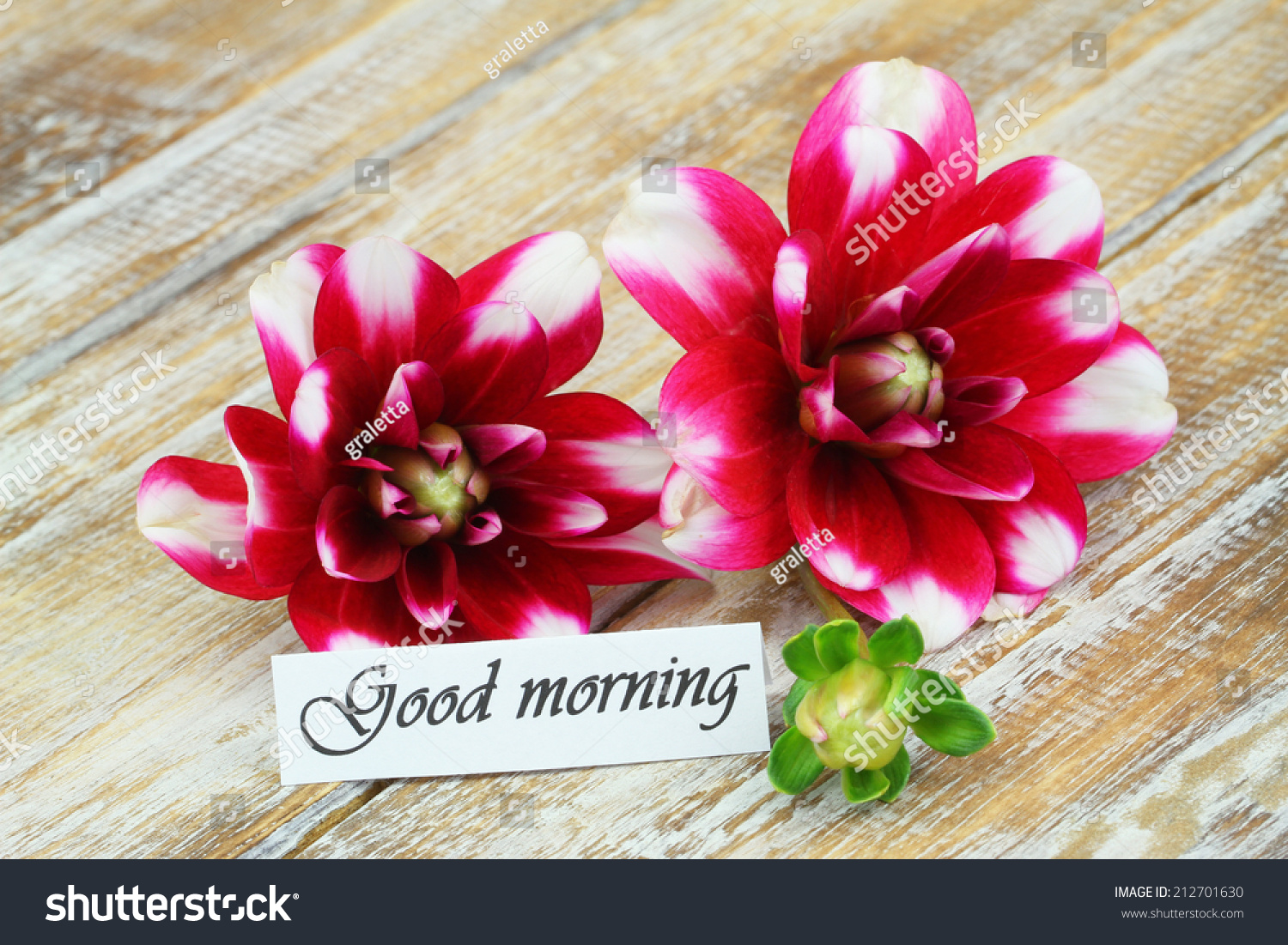 Good morning card dahlia flowers on stock photo edit now 212701630 good morning card with dahlia flowers on wooden surface izmirmasajfo