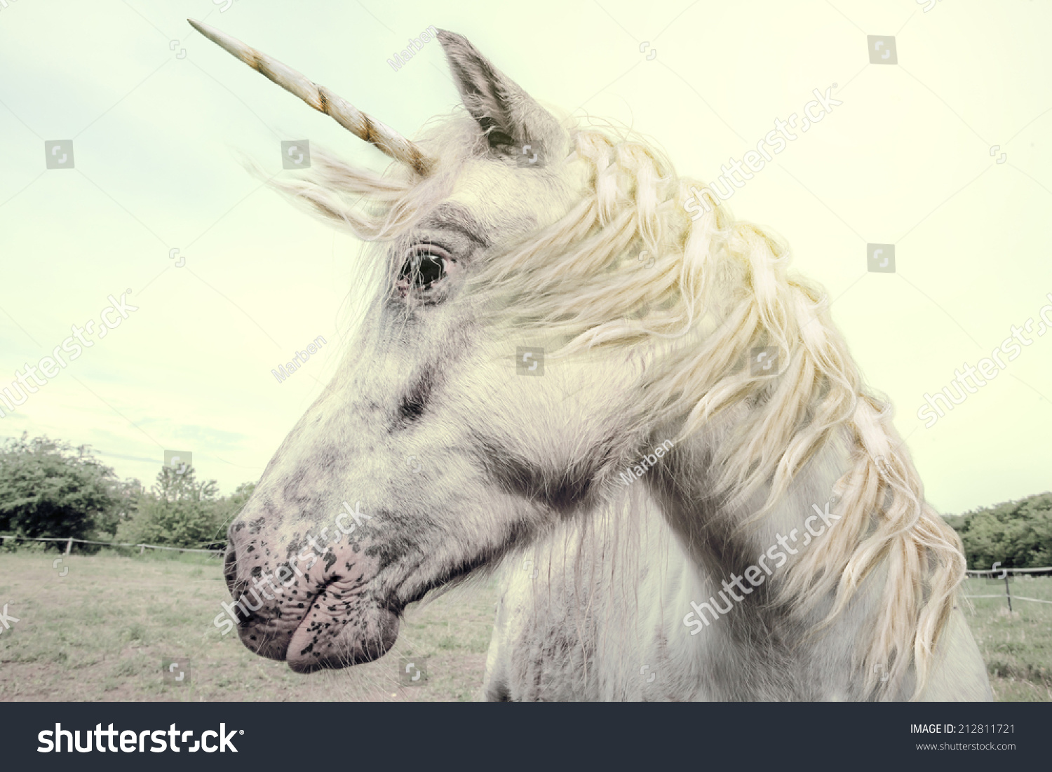 Unicorn Photography Realistic Stock Illustration 212811721 ...