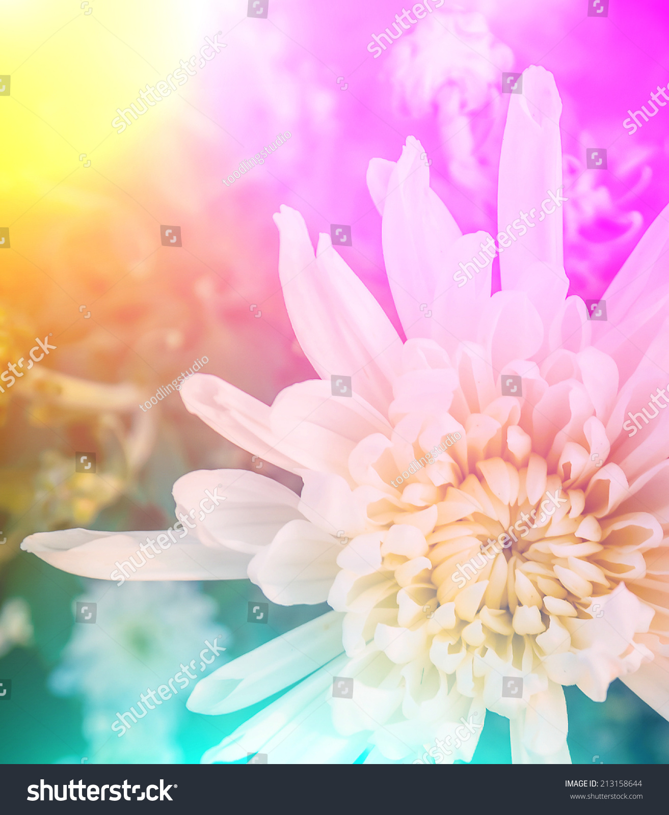 Such Gorgeous Colors And Softness: Vivid Colors Beautiful Floral In Soft Style.For Art