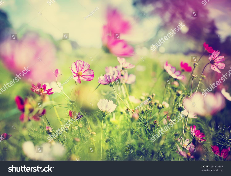 garden design with beautiful garden flowers stock photo shutterstock with garden patio from shutterstock - Garden Flowers