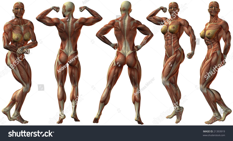 human body in western art