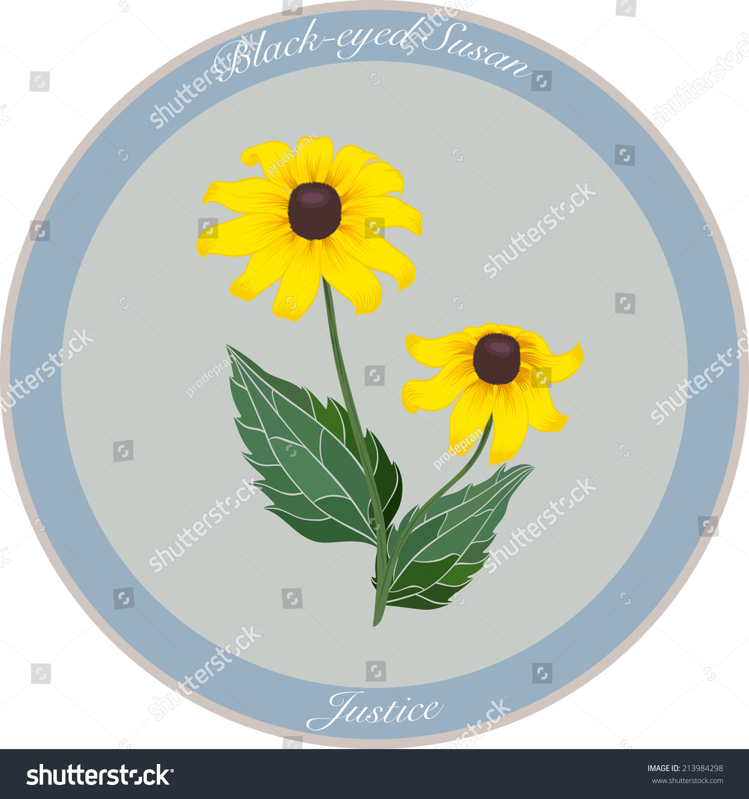 Black Eyed Susan Flower Meaning Justice Stock Vector Royalty Free