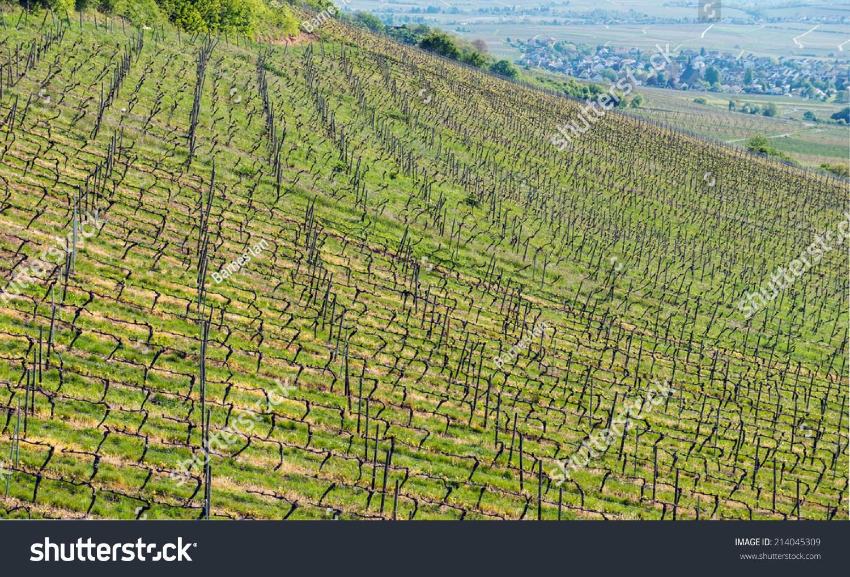 Aerial View Hillside Grape Vines Near Stock Photo