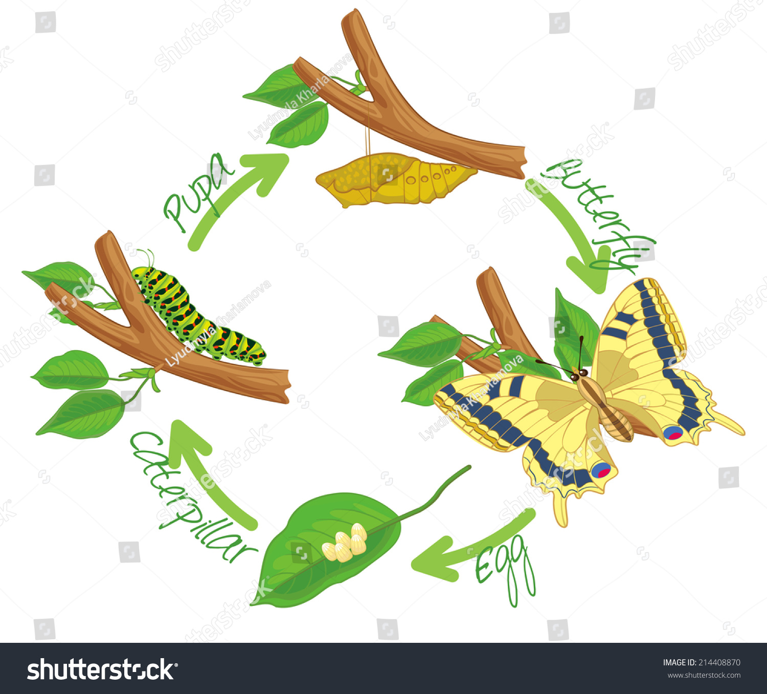 Worksheet What Is The Life Cycle Of A Caterpillar metamorphosis butterfly egg caterpillar pupa stock the of life