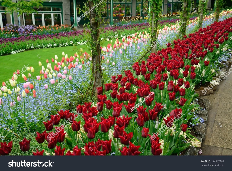 Beautiful Tulip In Spring Garden Stock Photo 214467907
