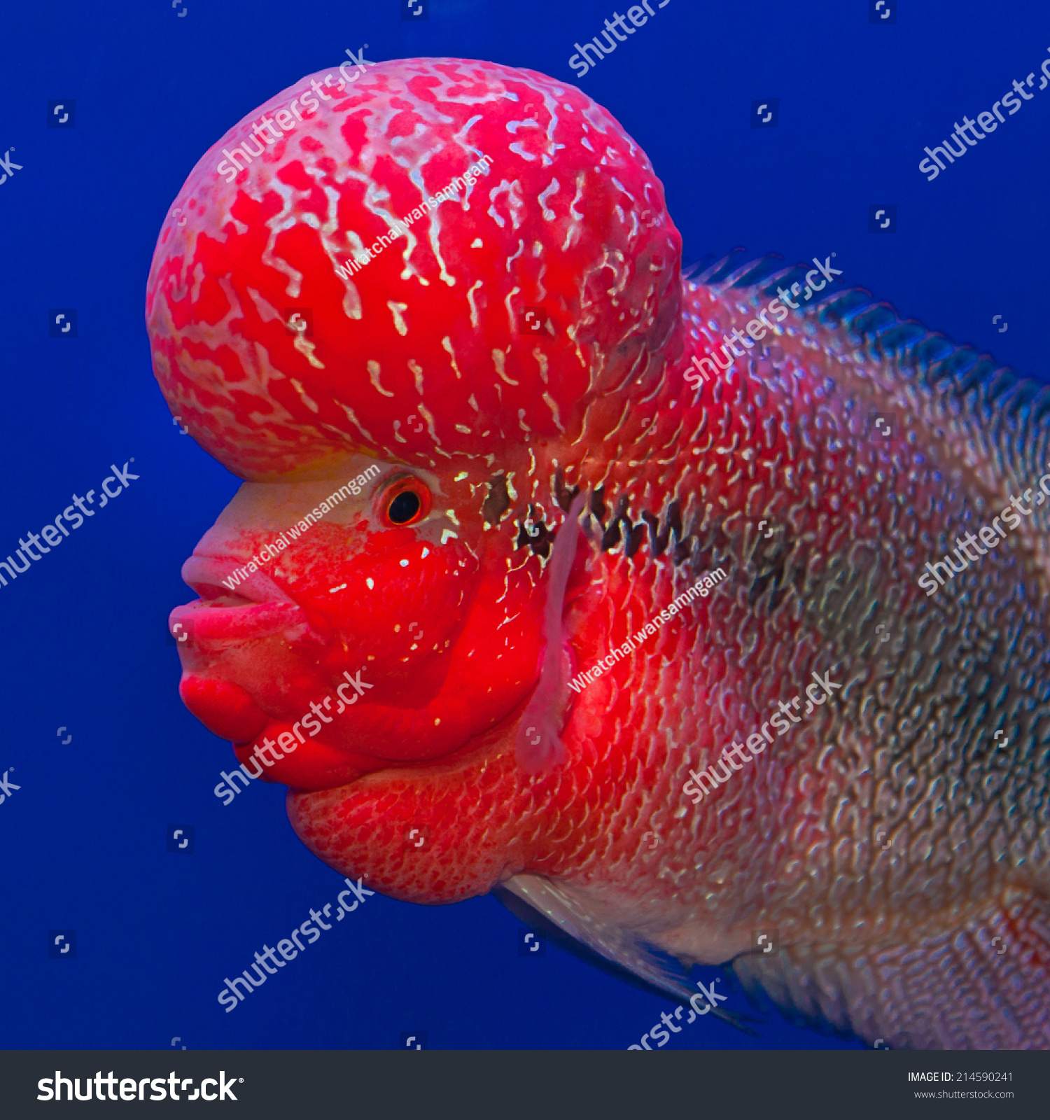 Colorful fish in fish tank | EZ Canvas