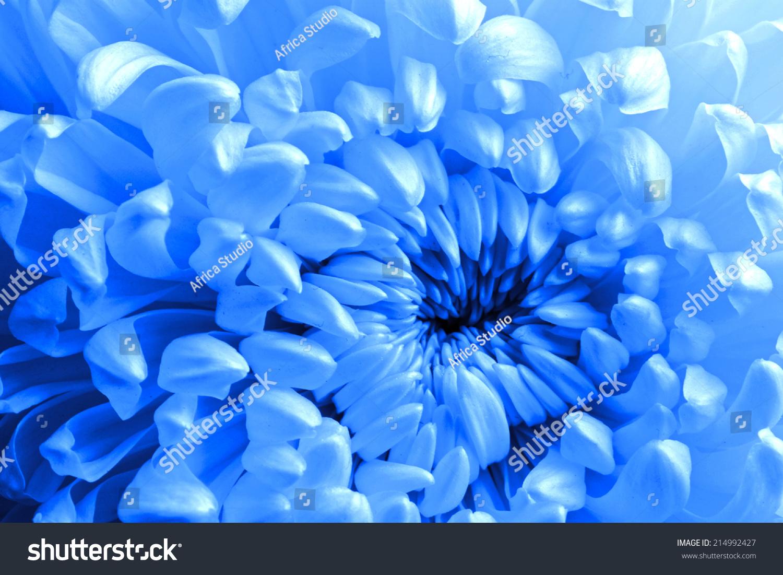 Beautiful Blue Flower Background Stock Photo Edit Now 214992427