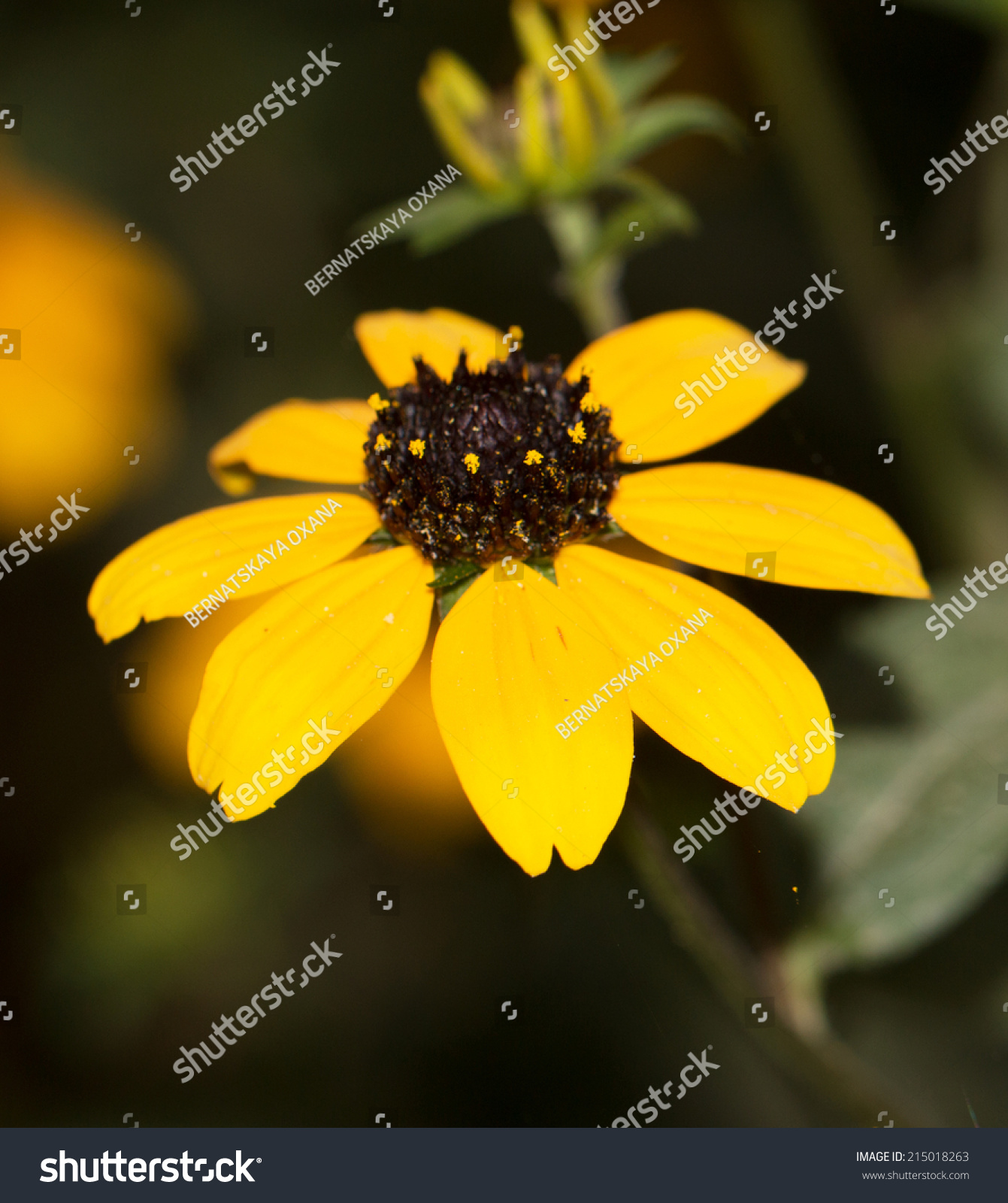Beautiful Yellow Flower In Nature Ez Canvas