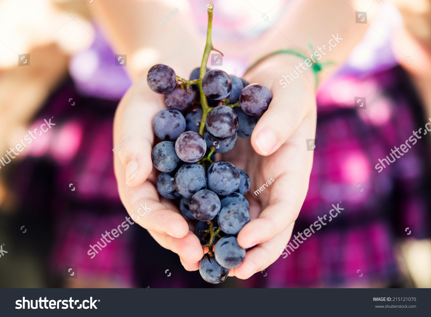 Young Girl Holding Ripe Organic Grapes Stock Photo ...