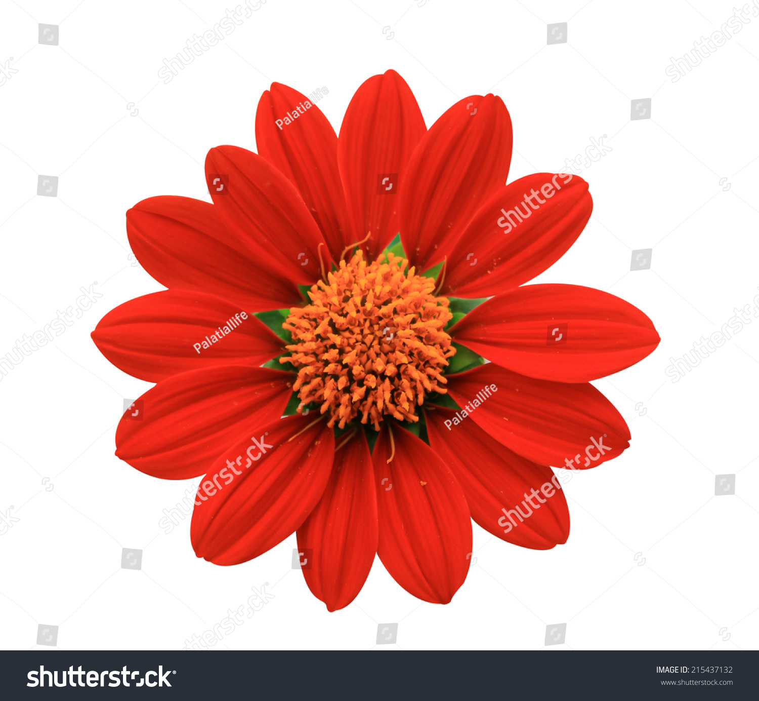 Flower Sometimes Known Bloom Blossom Reproductive Stock Shu