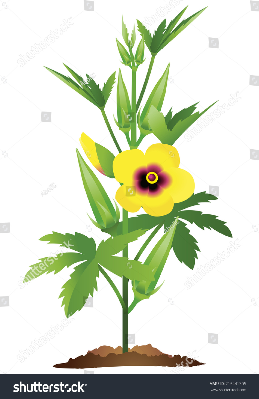 fully grown okra plant okra flowers stock vector 215441305