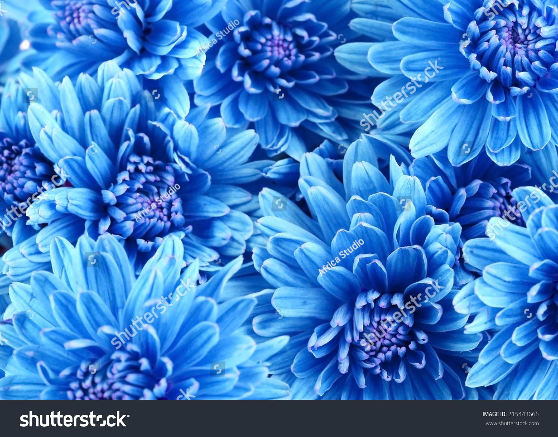 Beautiful Blue Flowers Closeup Stock Photo Edit Now 215443666