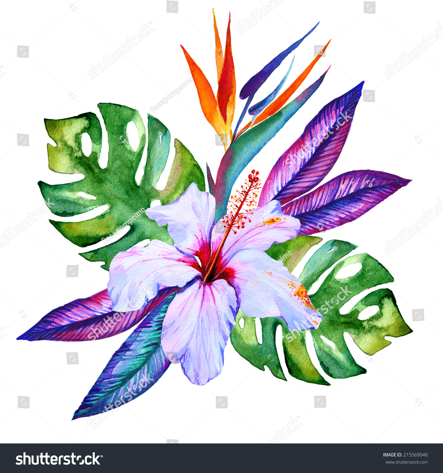 Tropical Flowers Watercolor Hibiscus Plumeria Monstera Stock Illustration 215569048 - Shutterstock