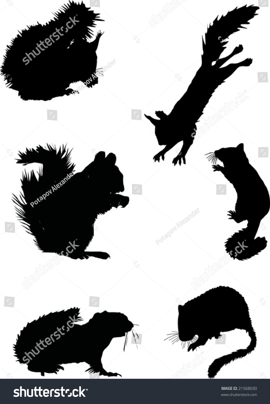 illustration with six squirrel silhouettes isolated on white  - illustration with six squirrel silhouettes isolated on white background   shutterstock