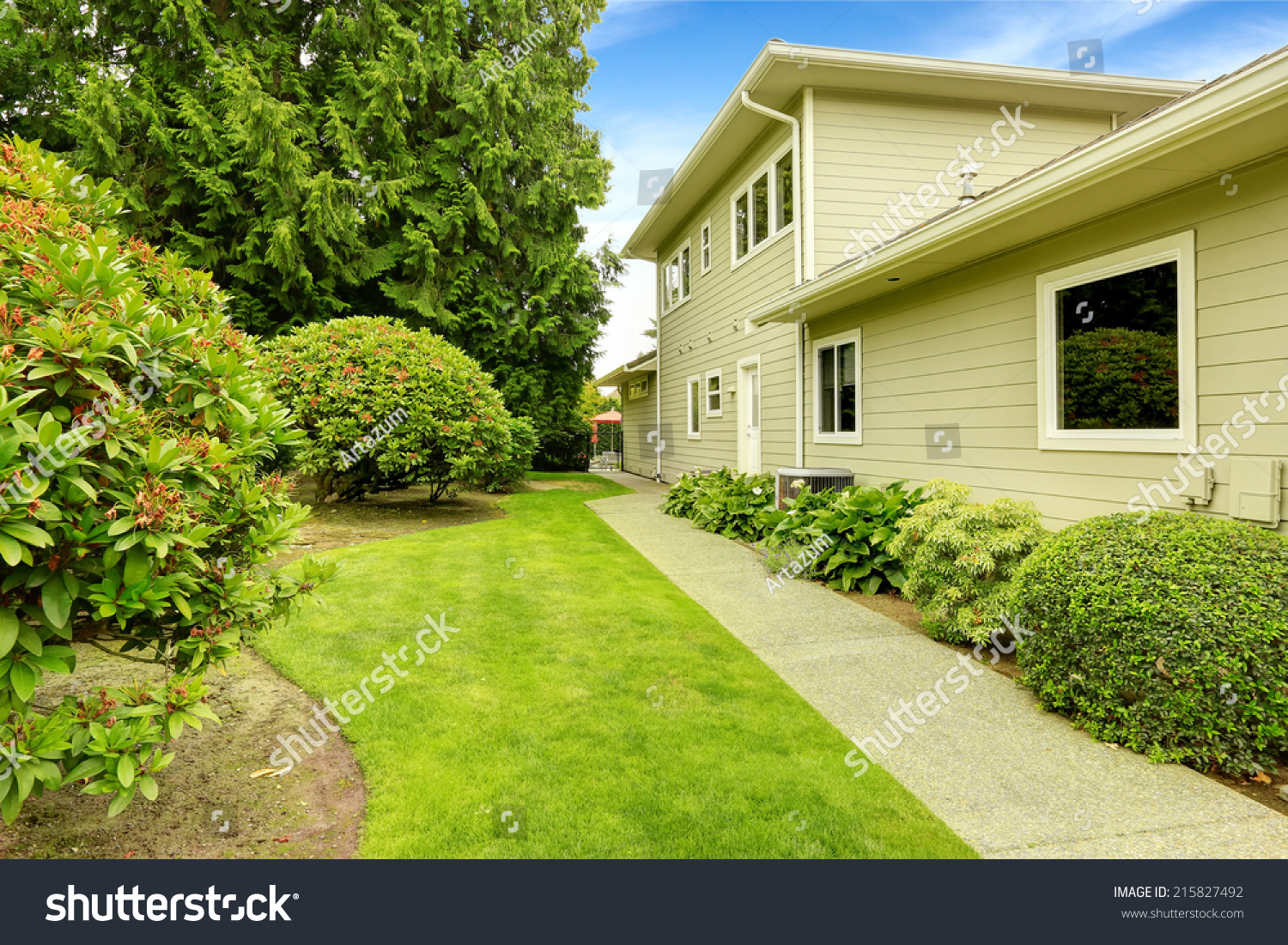 beautiful backyard garden walkway rhododendron bushes stock photo