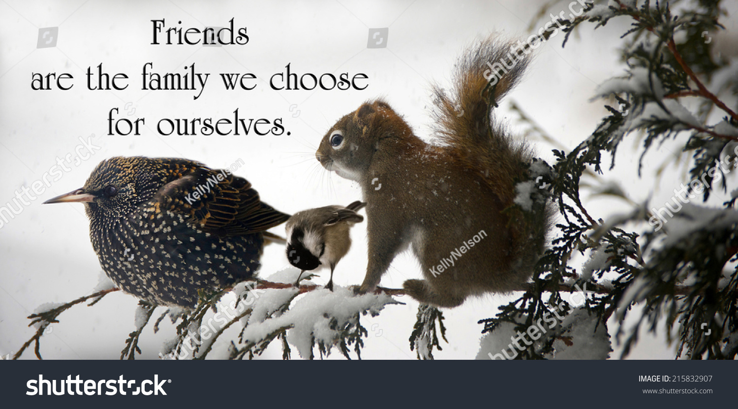 Inspirational Quote About Friendship Inspirational Quote On Friendshipunknown Stock Photo 215832907