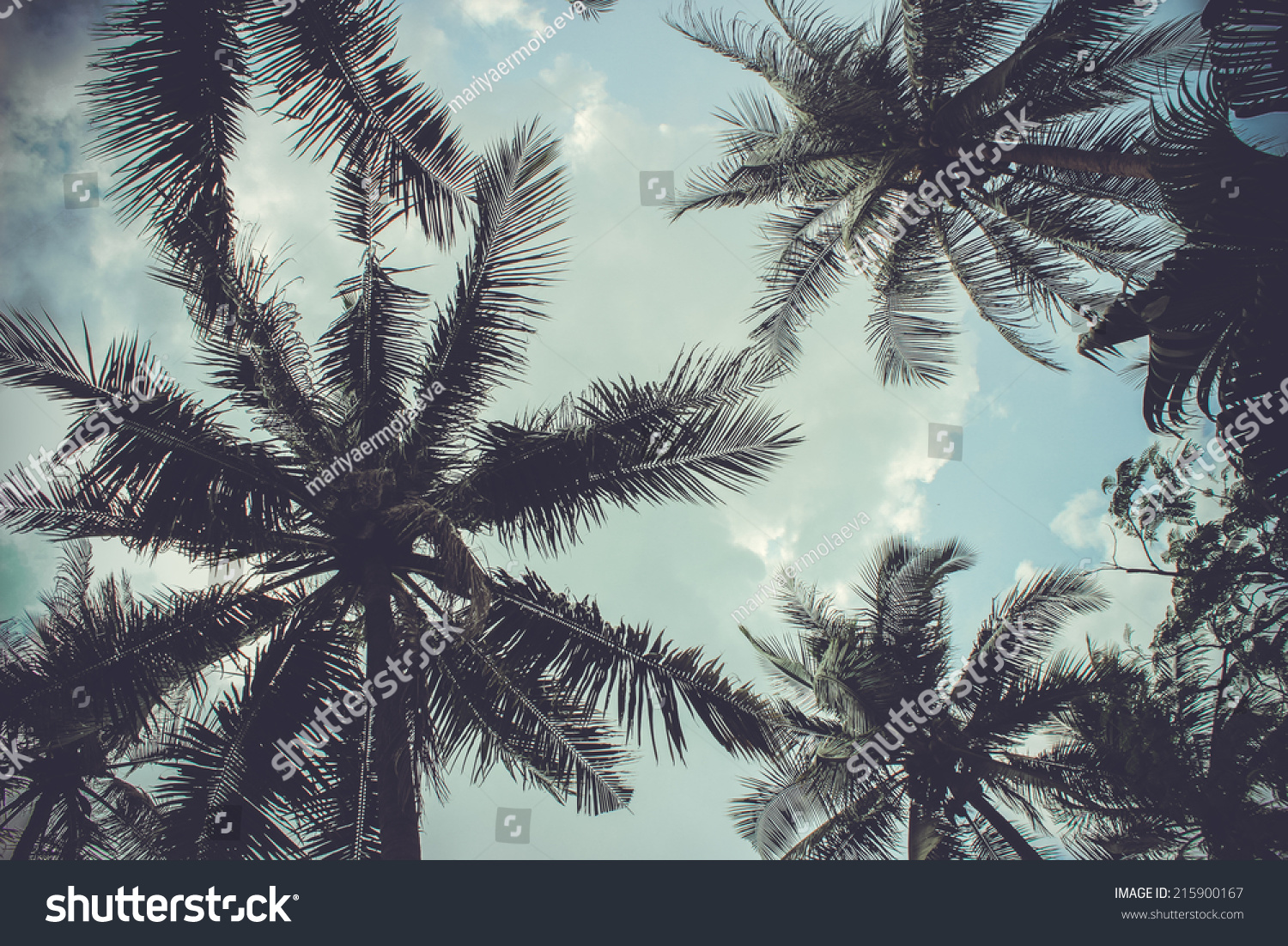 Branches Coconut Palms Under Blue Sky Stock Photo ...