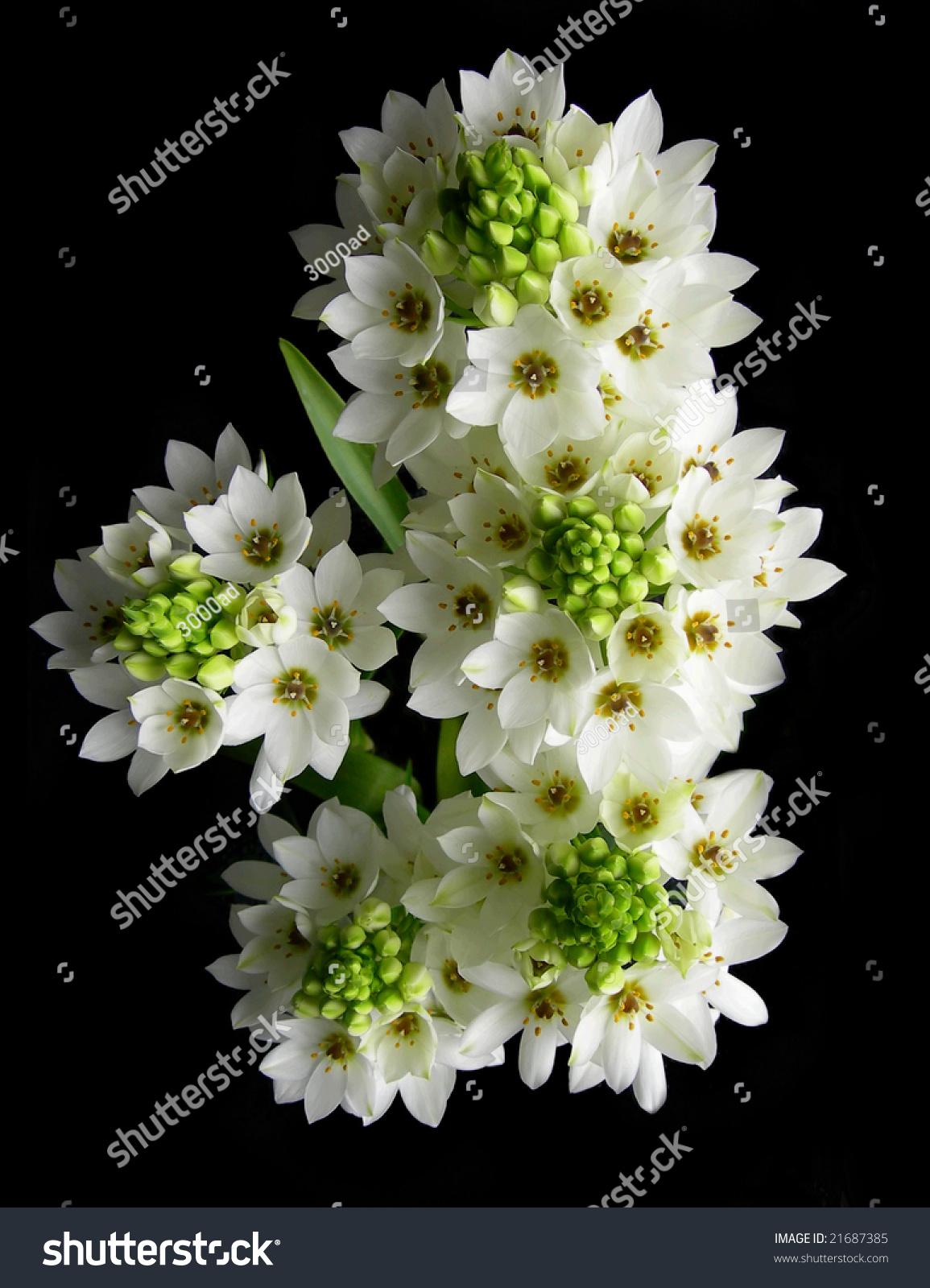 Close up on white flowers bouquet against dark background ez canvas izmirmasajfo