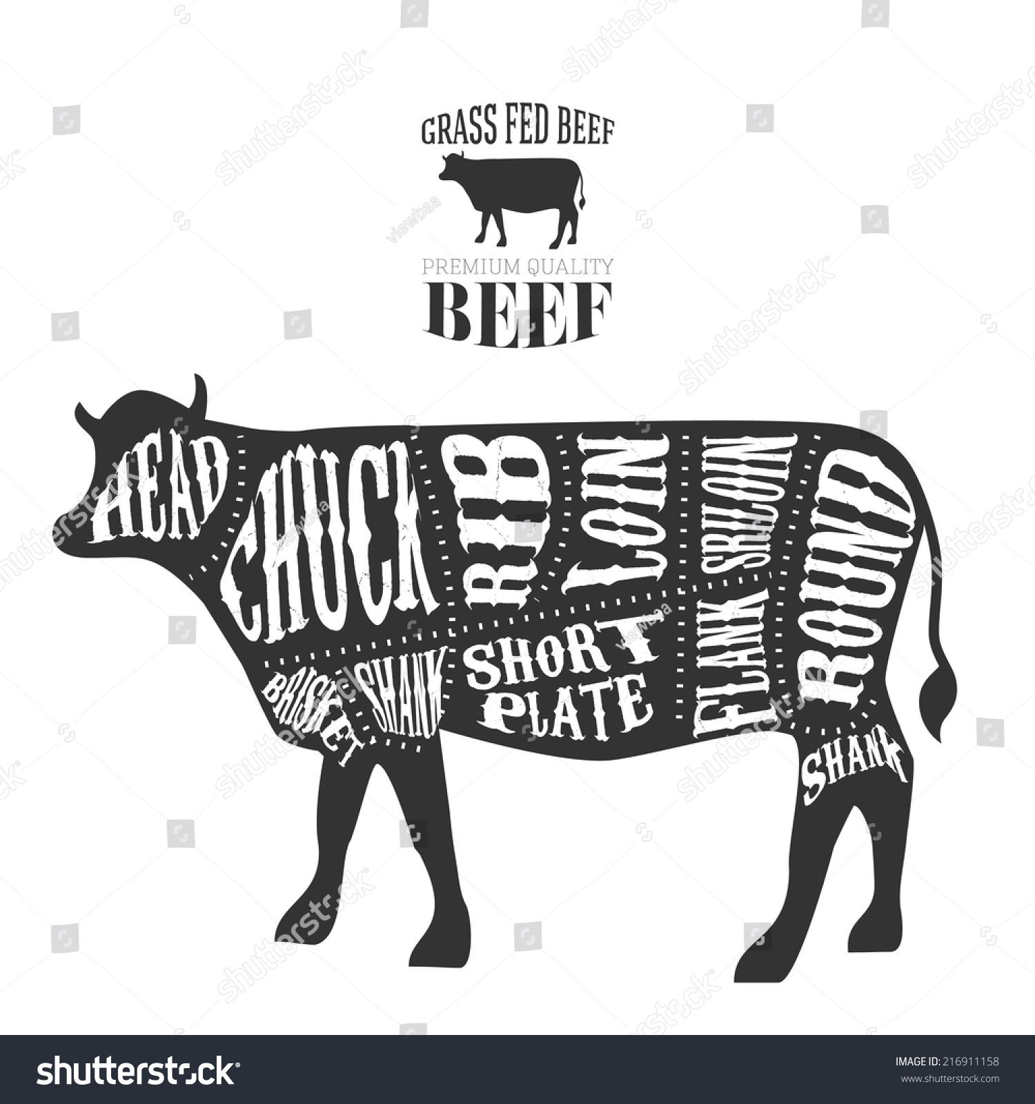 Vector beef cuts diagram vintage style stock vector 216911158 vector beef cuts diagram in vintage style pooptronica
