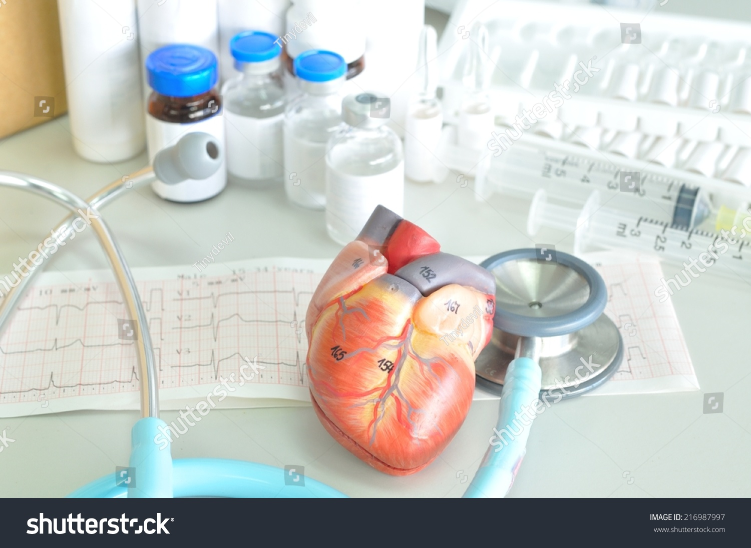 Heart Model Diagram - Wiring Diagrams List