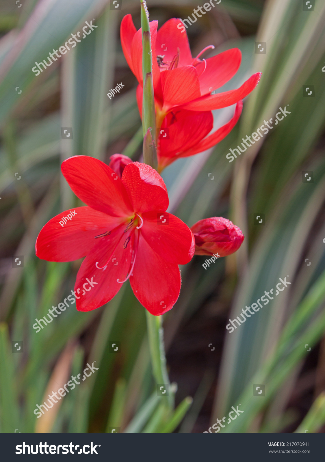 Flowers Jungle Canna Lilies On Flower Bed Ez Canvas