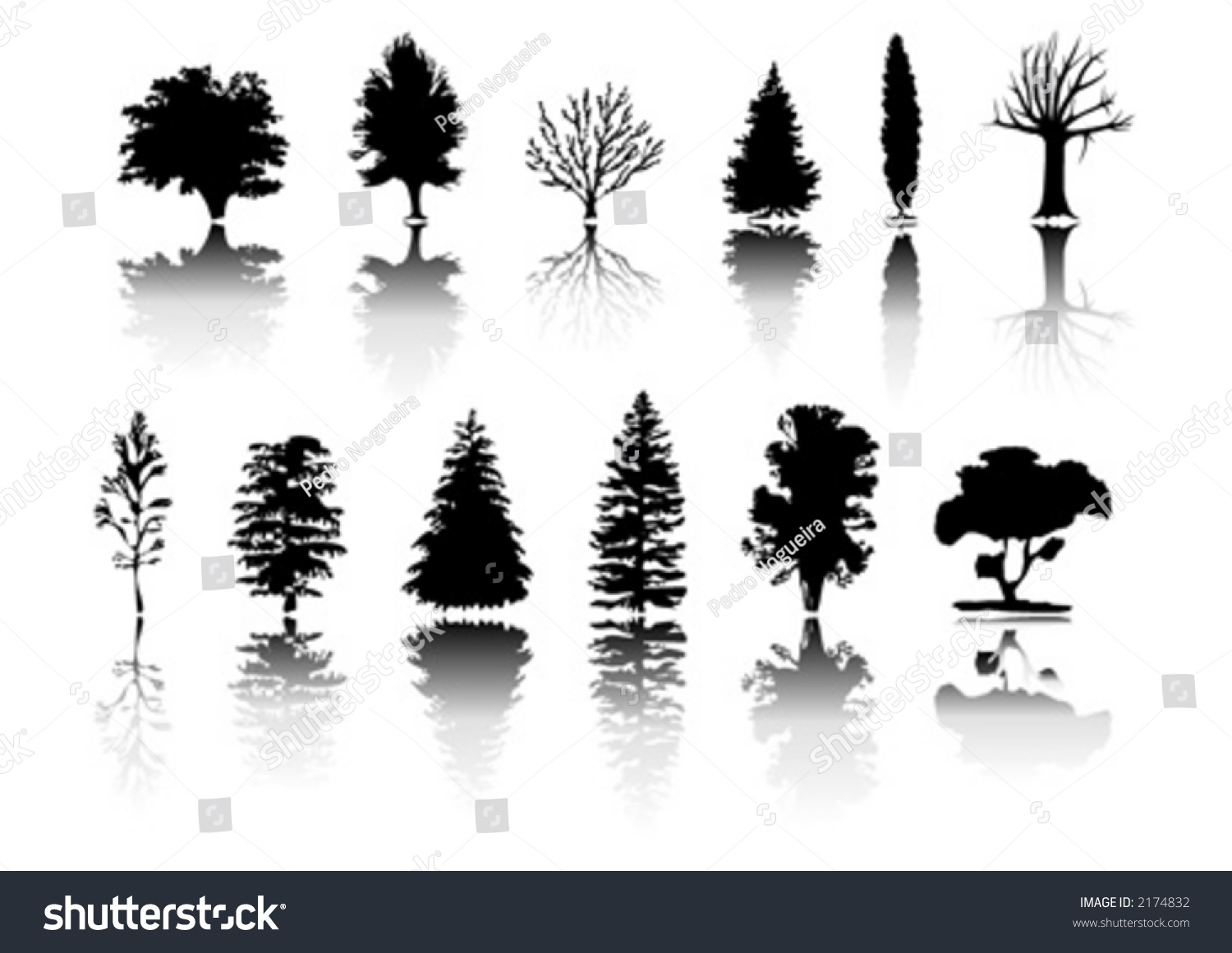 silhouettes different kind trees stock vector 2174832 shutterstock