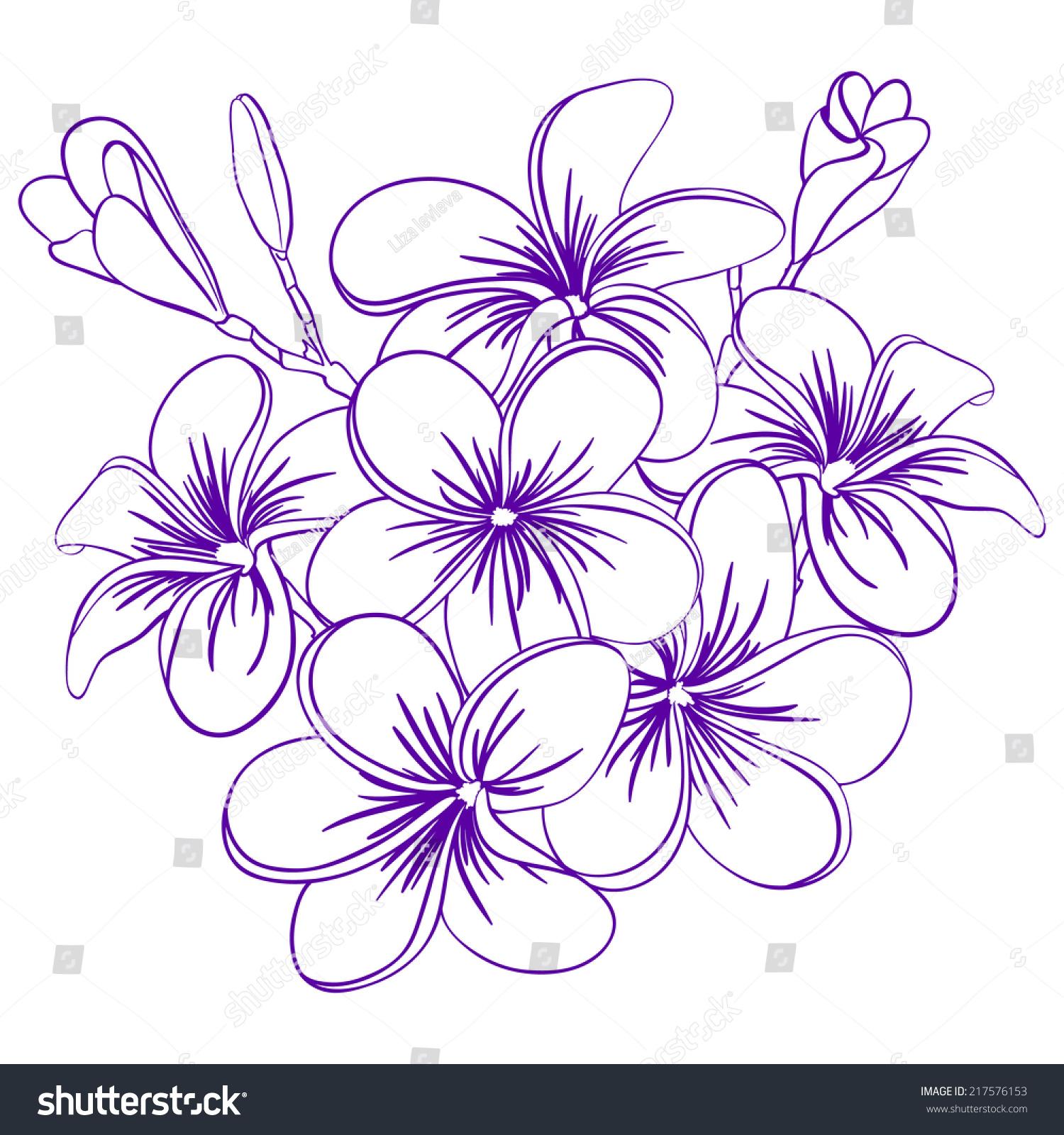 Beautiful Hand Drawn Plumeria Flowers Pretty Stock Vector Royalty