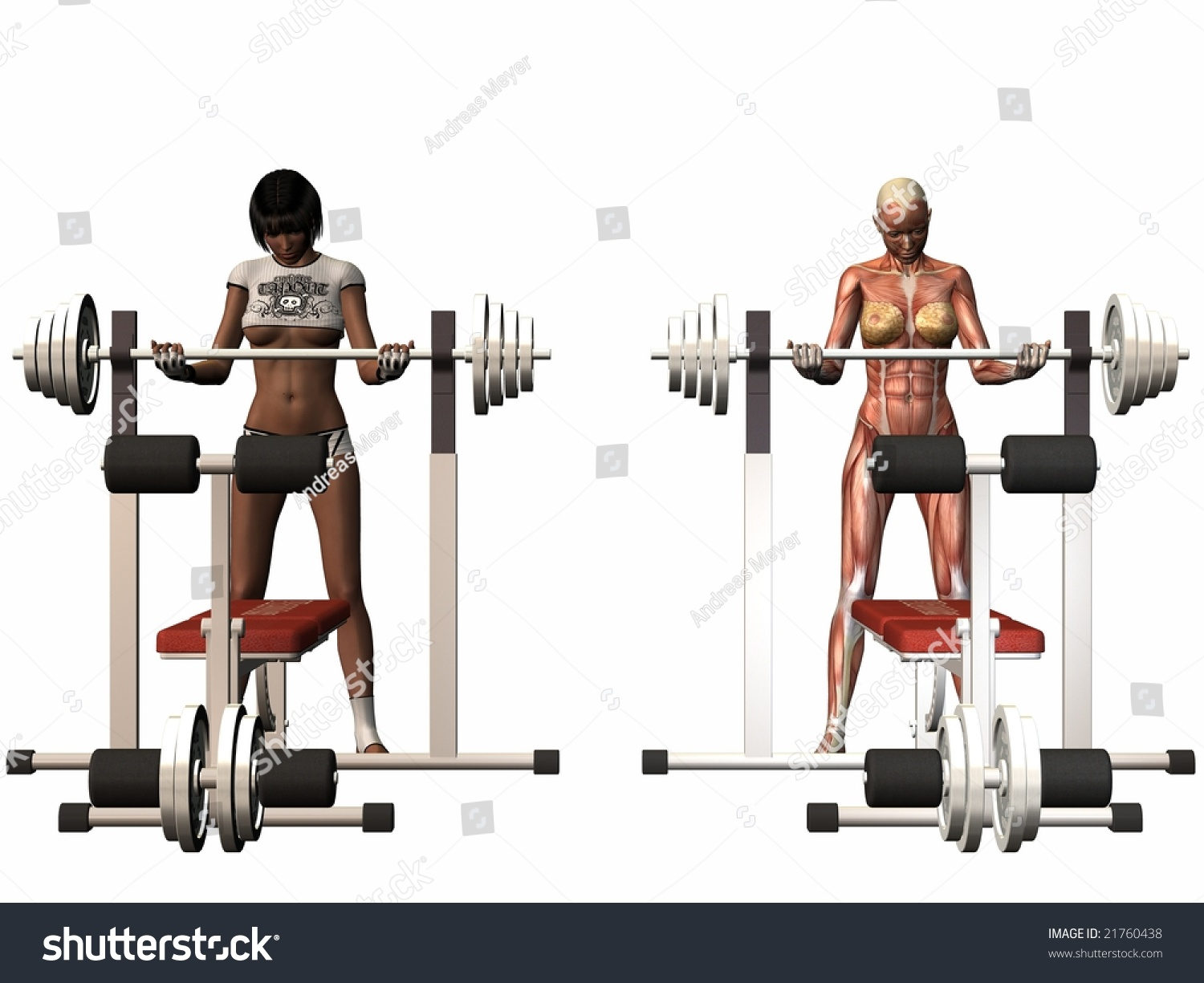 Female Human Body - Power Bench Stock Photo 21760438 ...