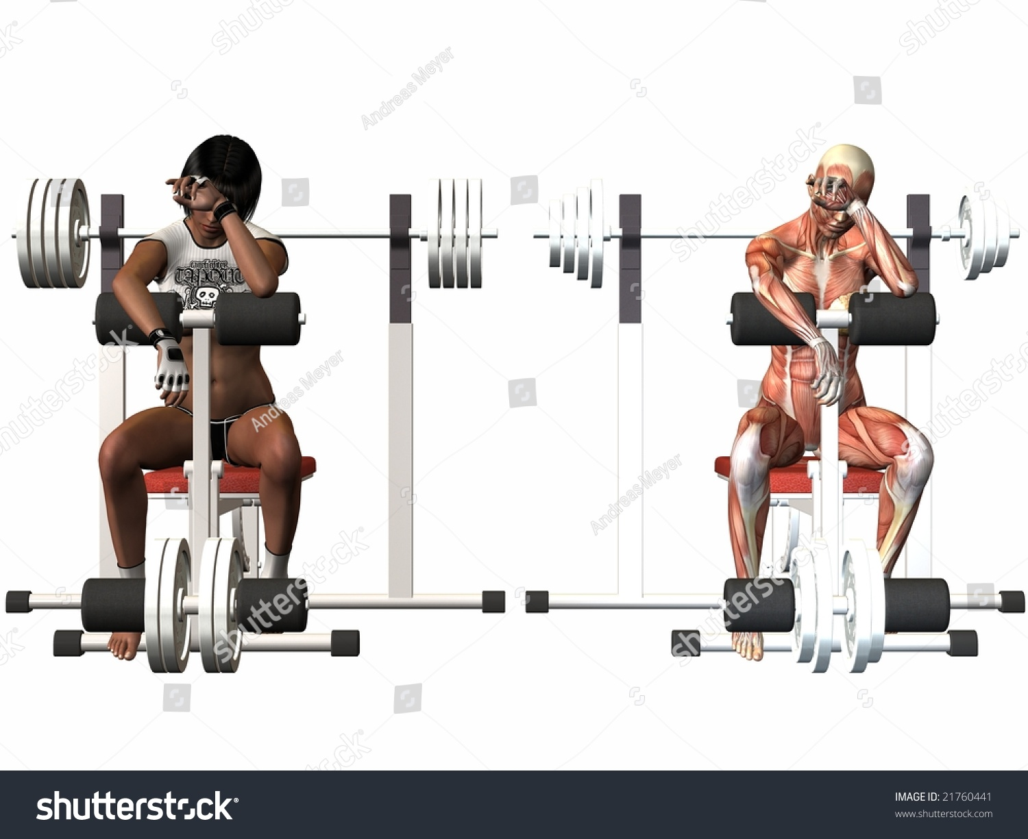 Female Human Body - Power Bench Stock Photo 21760441 ...