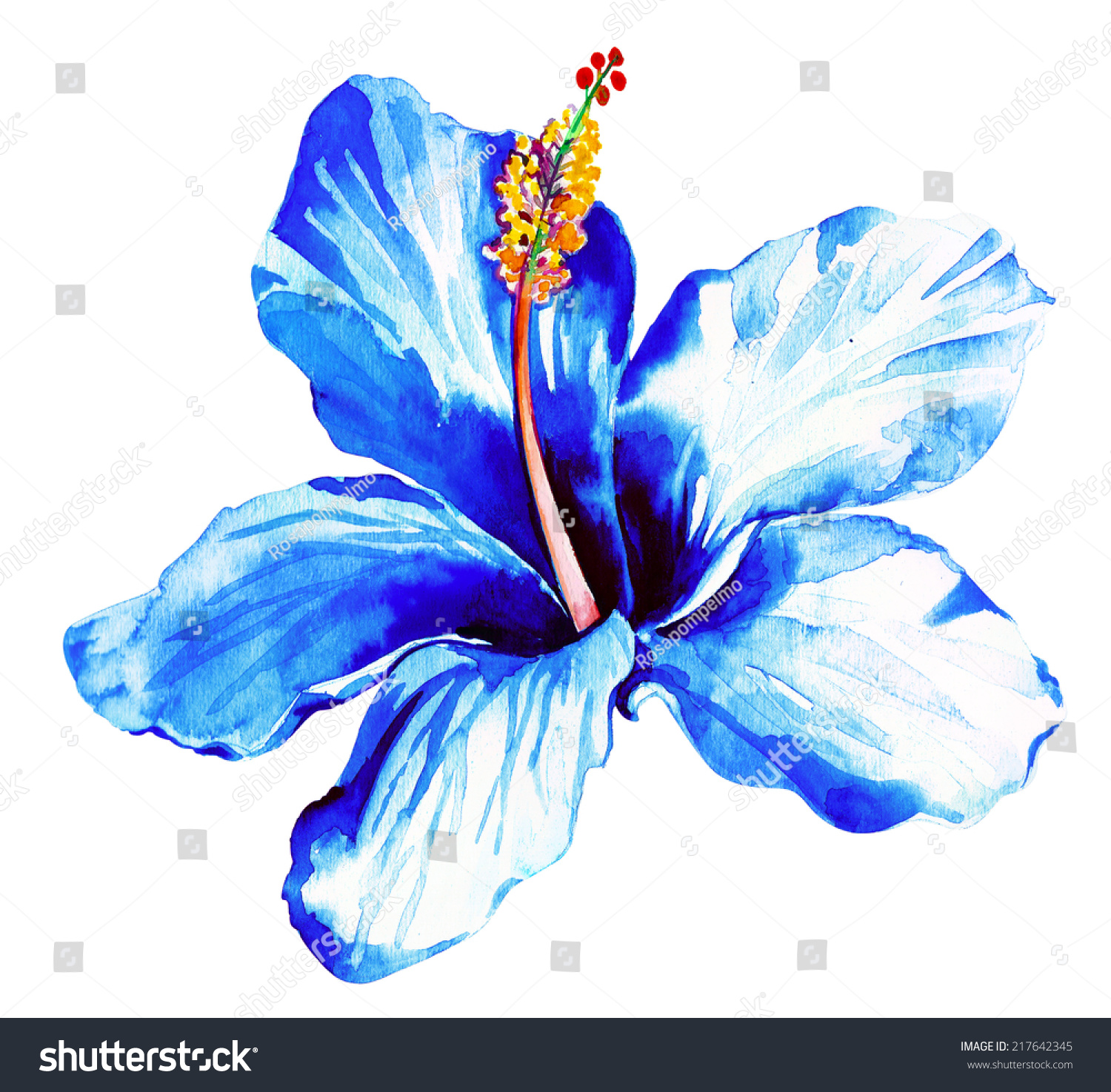 Exotic blue hibiscus watercolor illustration single stock exotic blue hibiscus watercolor illustration single flower isolated on white izmirmasajfo