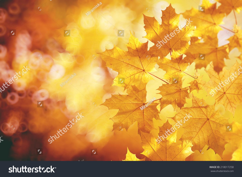 autumn fall tree backgrounds - photo #40