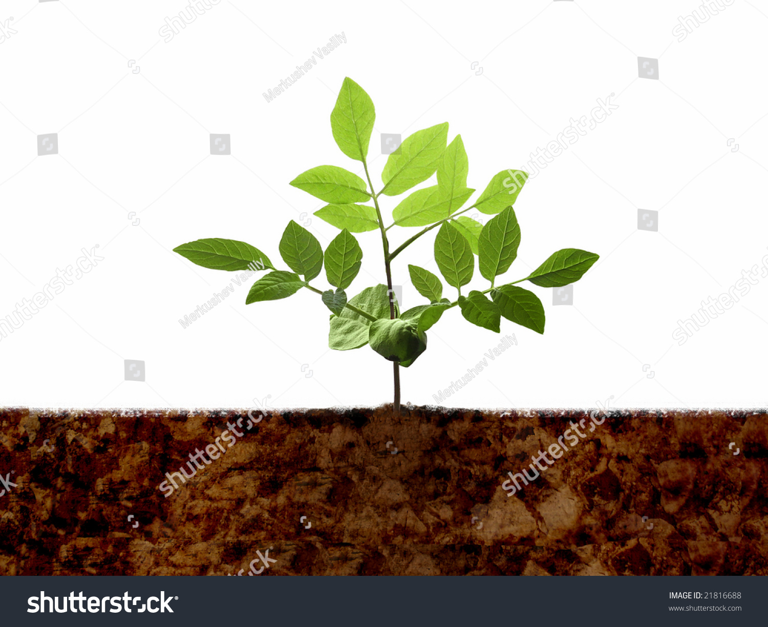 Green young plant shoot soil isolated stock photo for Soil young s modulus