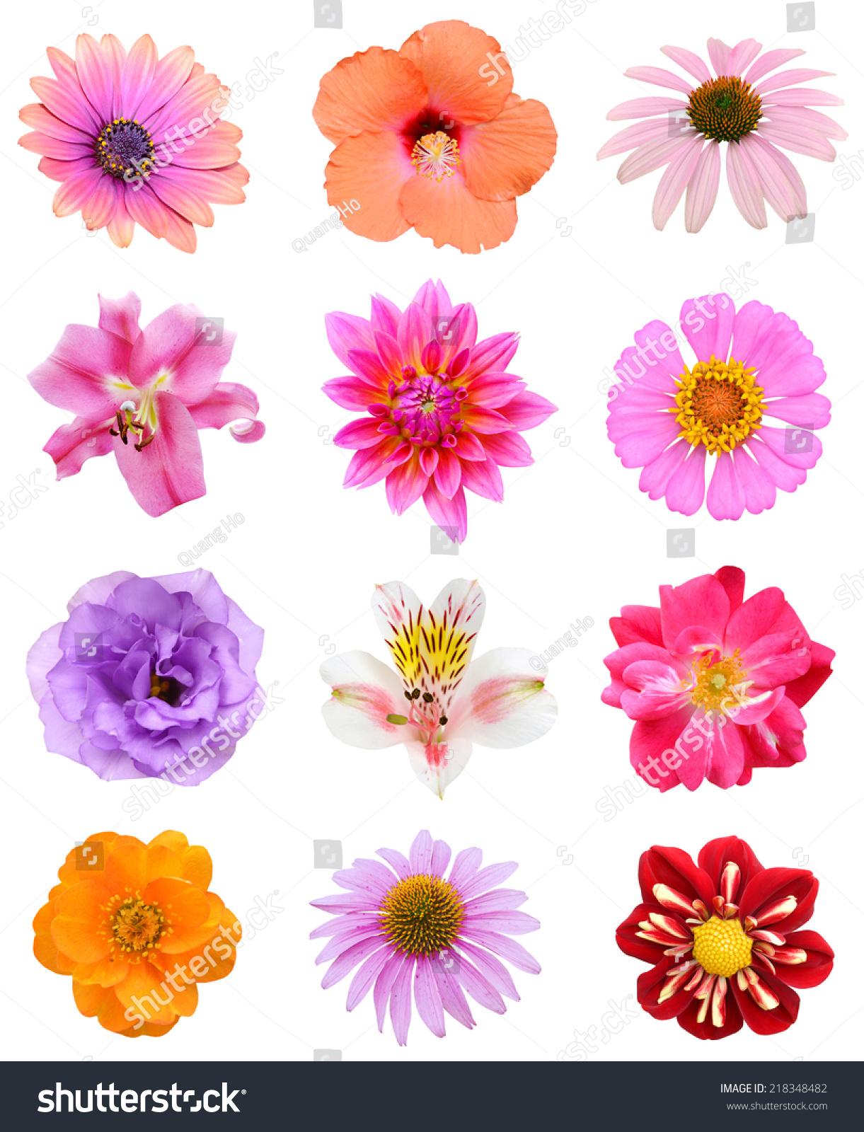Set Seasonal Colored Flowers Isolated White Stock Photo Edit Now