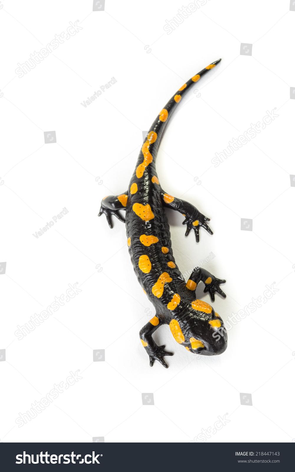 salamander white background -#main