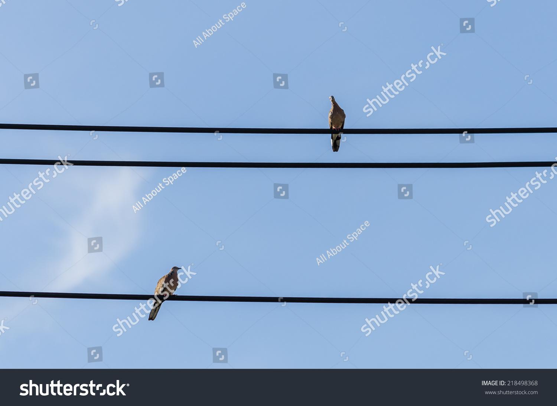 Birds On Wire Stock Photo (Edit Now) 218498368 - Shutterstock