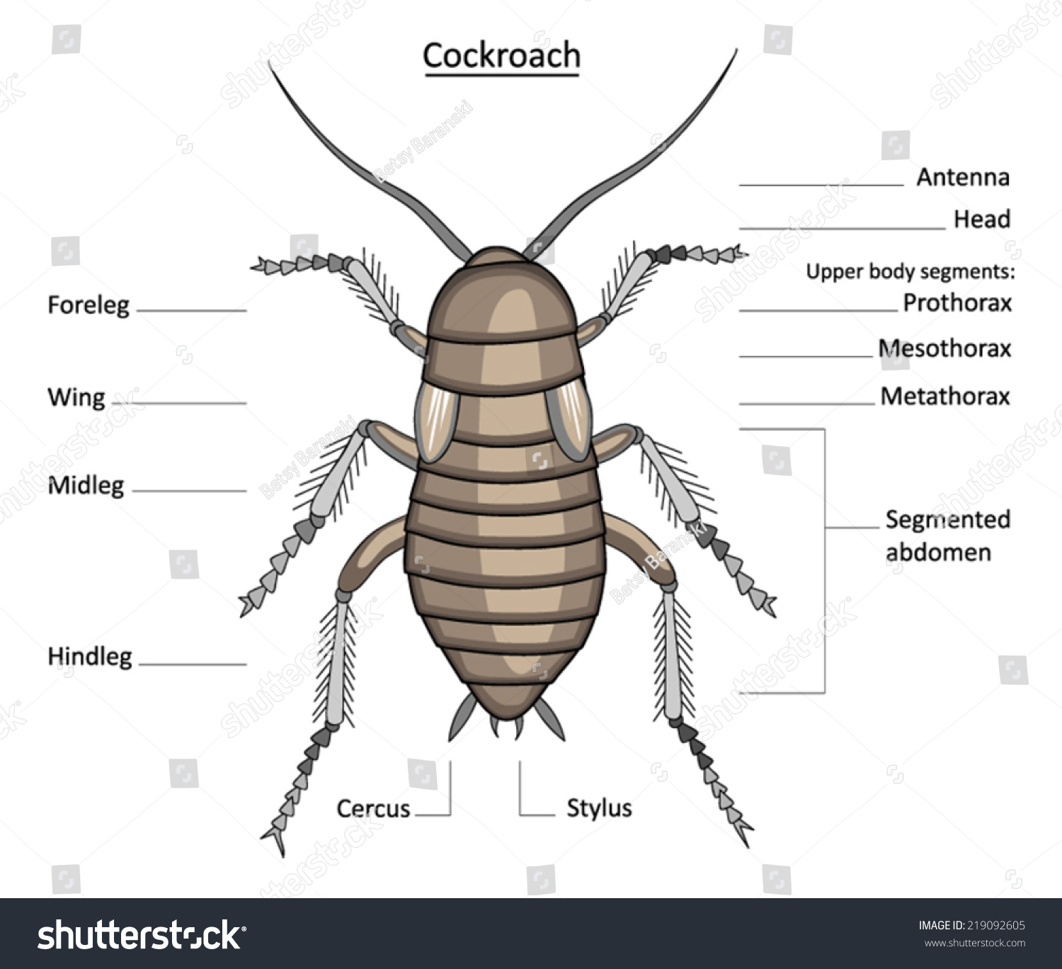 Cockroach Anatomy Line Art Labels Isolated Stock Vector (Royalty ...