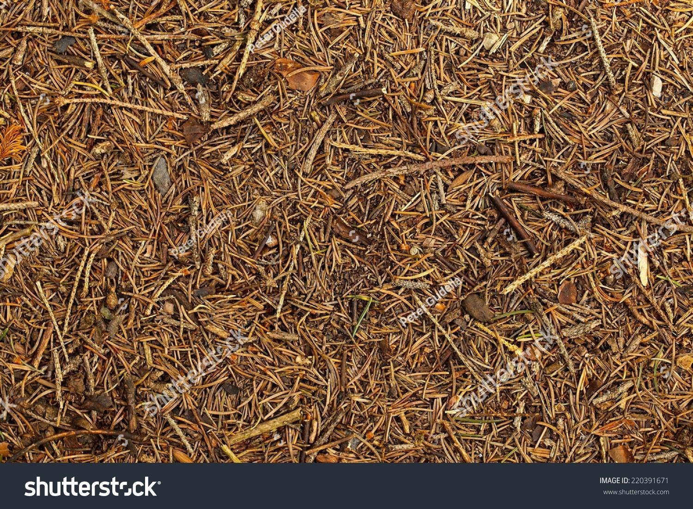 forest floor texture stock photo 220391671 - shutterstock