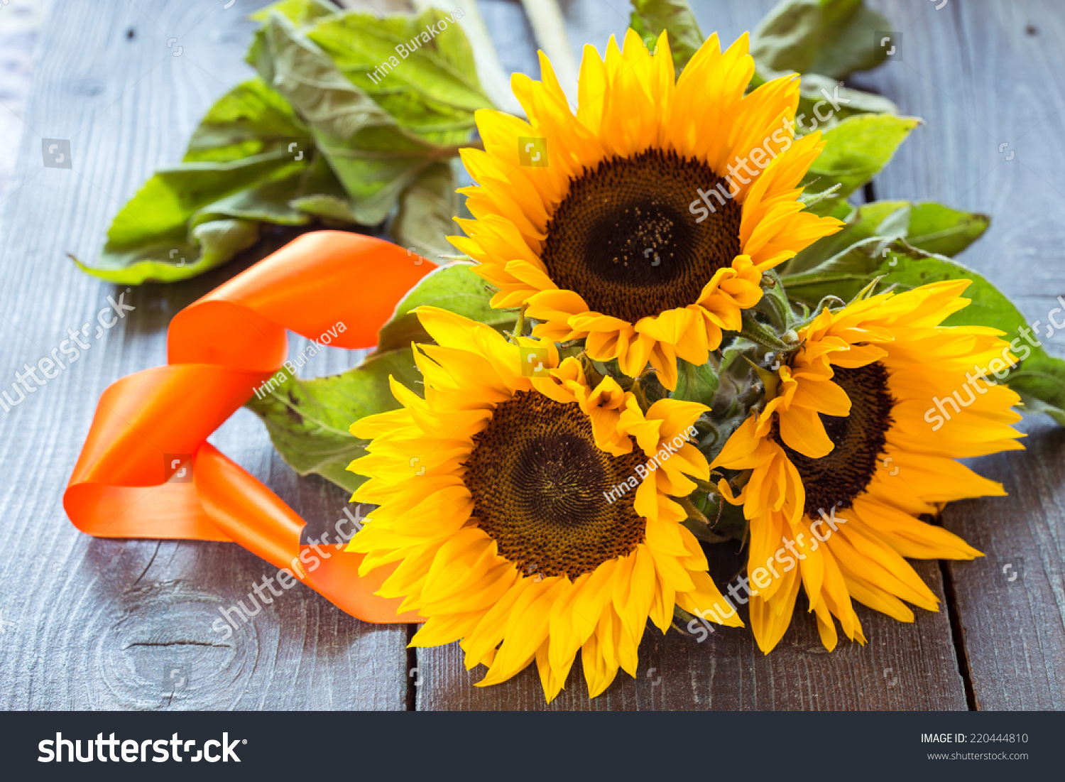 Three Flowers Sunflower On Dark Wooden Stock Photo Edit Now 220444810
