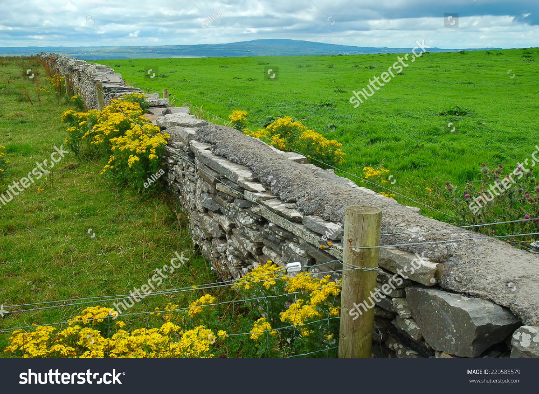 Old stone fence yellow flowers on stock photo edit now 220585579 old stone fence with yellow flowers on green fields background in northern ireland mightylinksfo