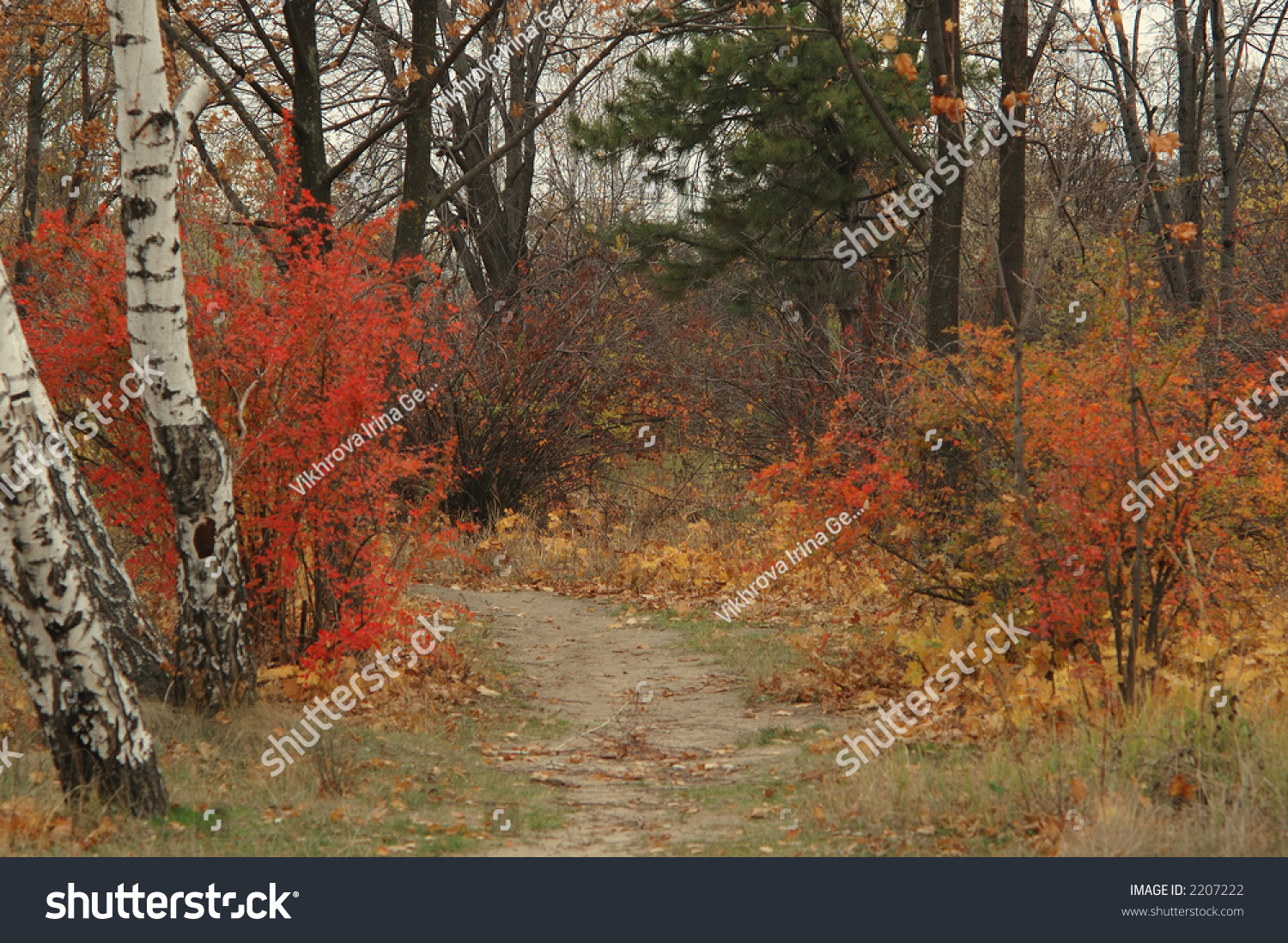 Autumn Landscape With Road Between The Trees Stock Photo