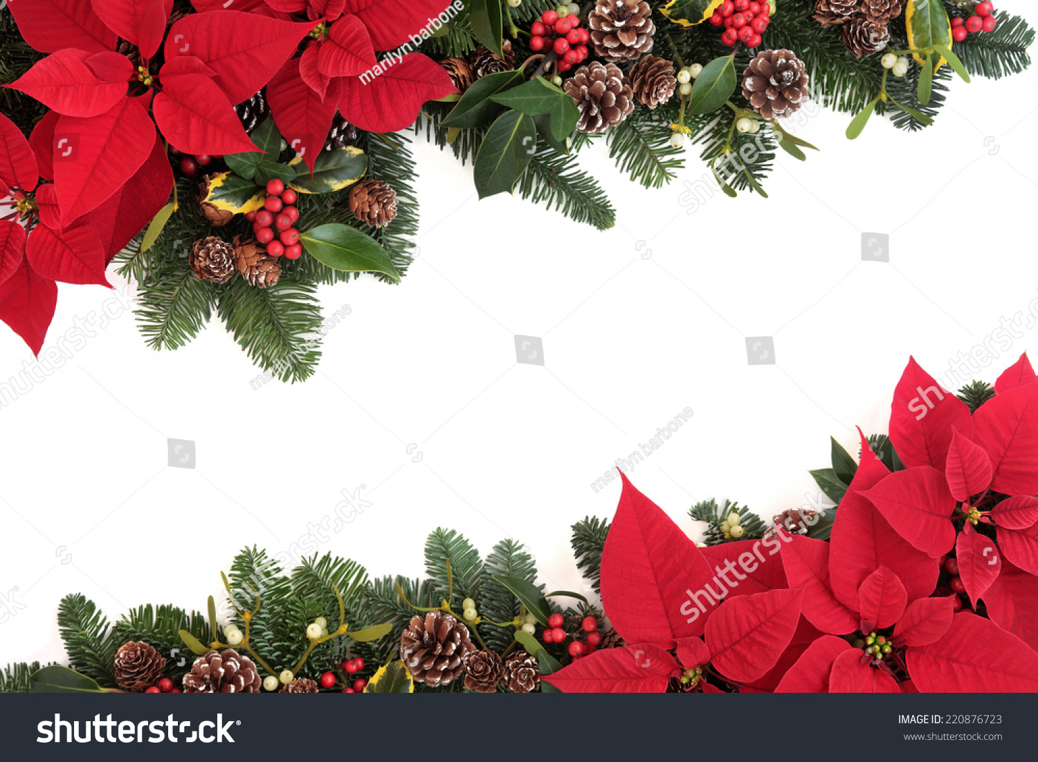 christmas poinsettia flower background border with holly ivy mistletoe pine cones and fir