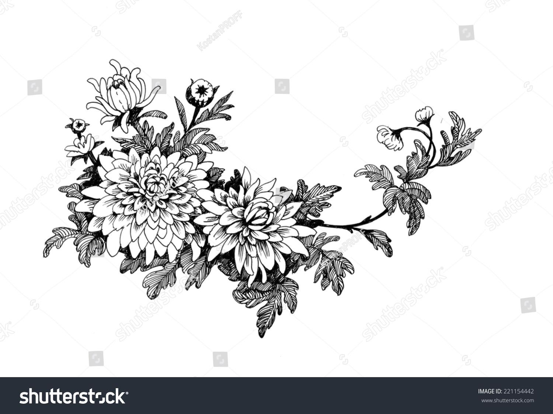 Chrysanthemum Flower Line Drawing : Hand drawing chrysanthemum flower stock illustration