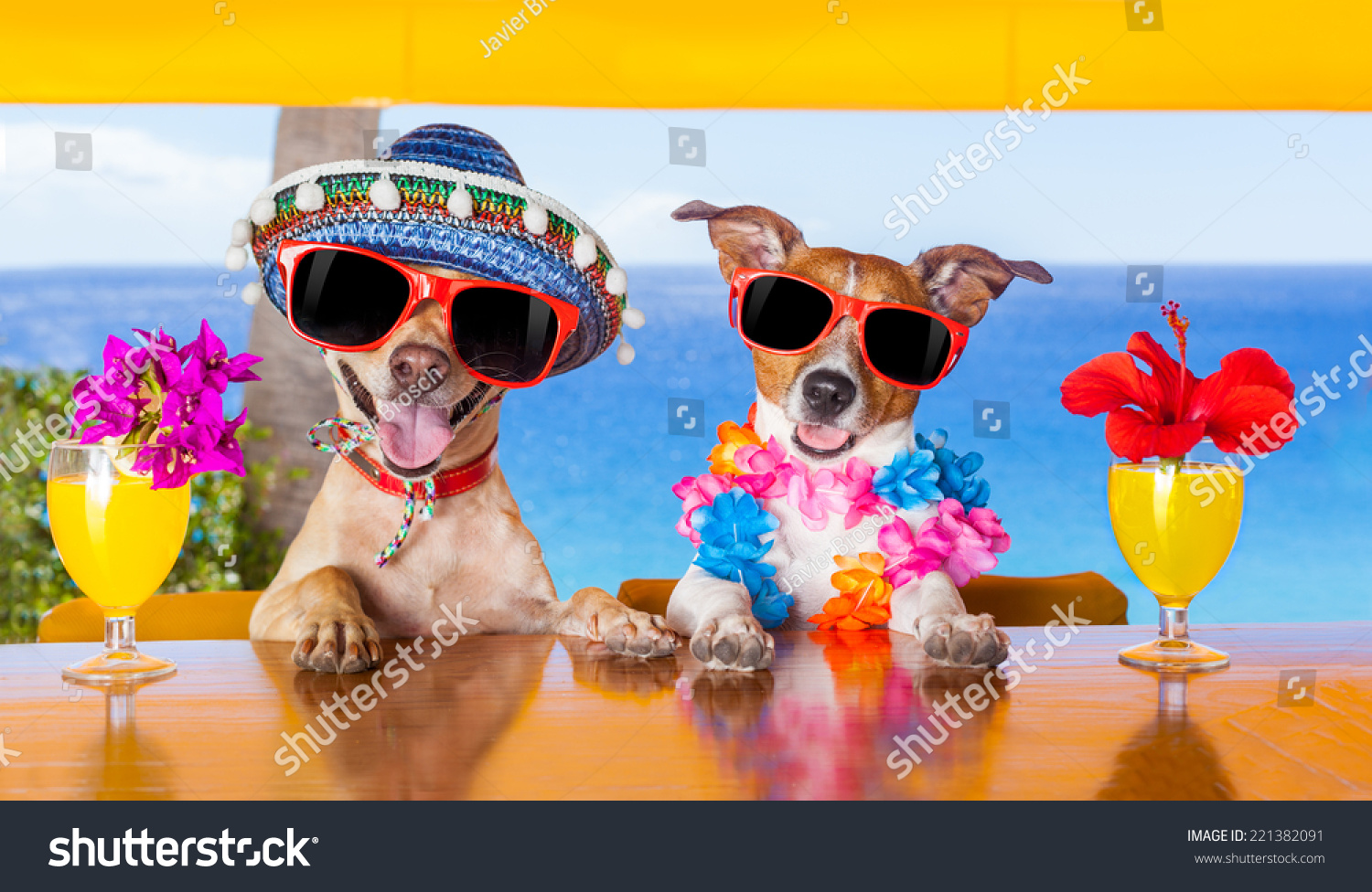 Two Funny Dogs Drinking Cocktails At The Bar In A Beach Club Party With Ocean View ...