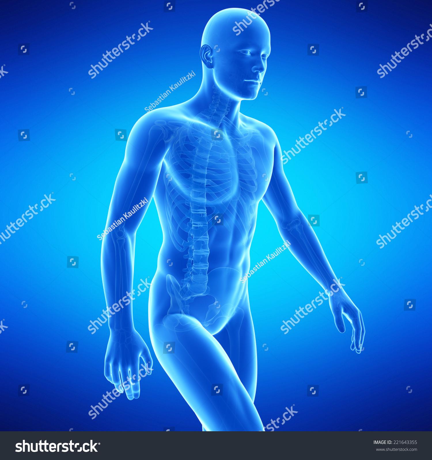 Medical Illustration Of The Upper Body Anatomy Ez Canvas