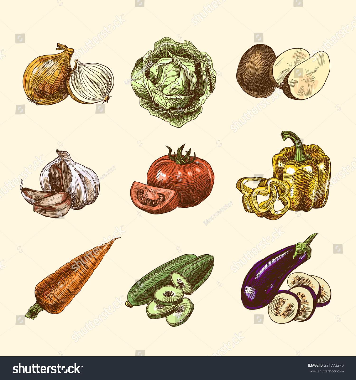 Vegetable Natural Organic Fresh Food Color Stock Vector 221773270 ...