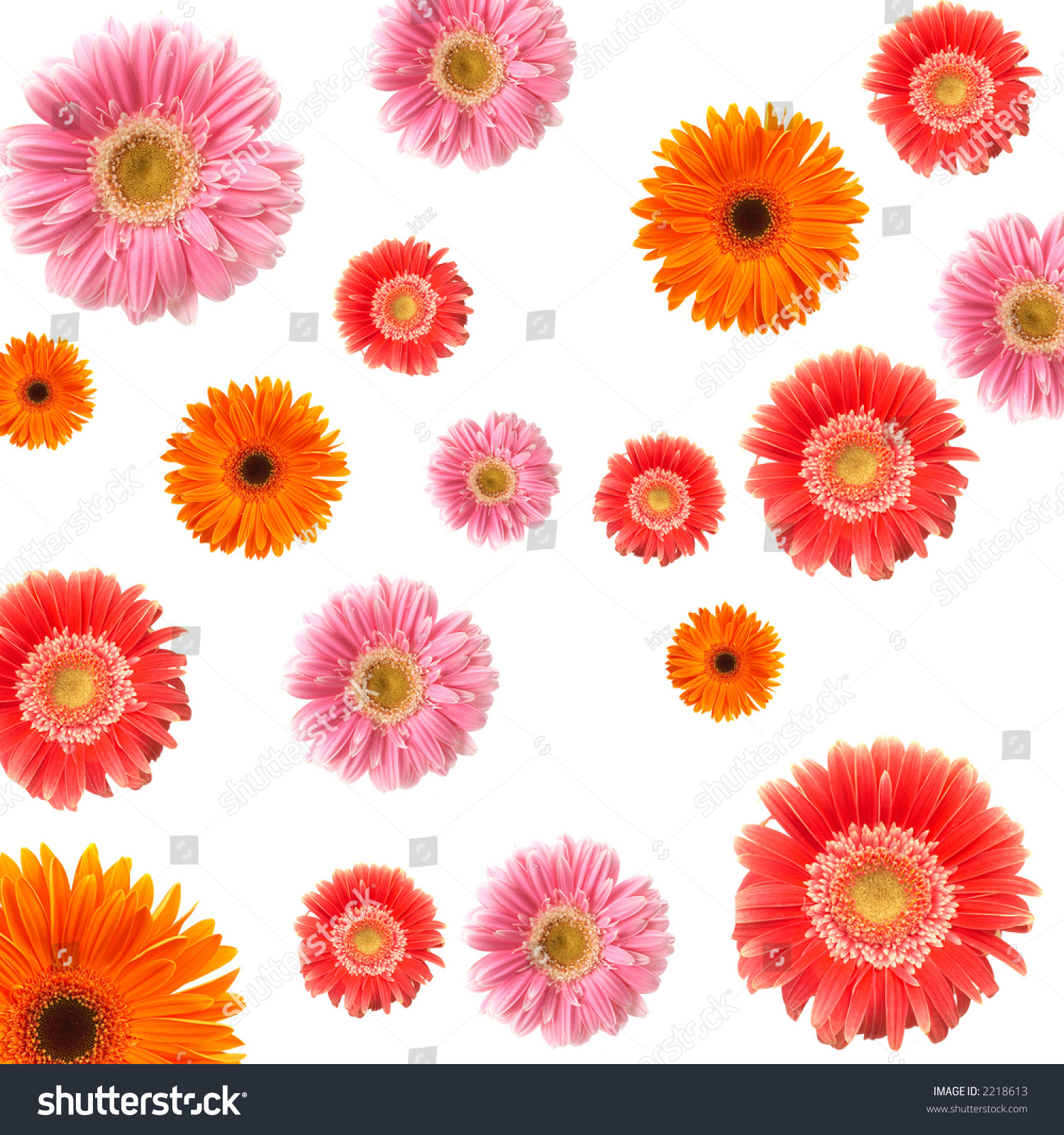 Lots Colorful Daisy Flowers On White Stock Photo 2218613 Shutterstock