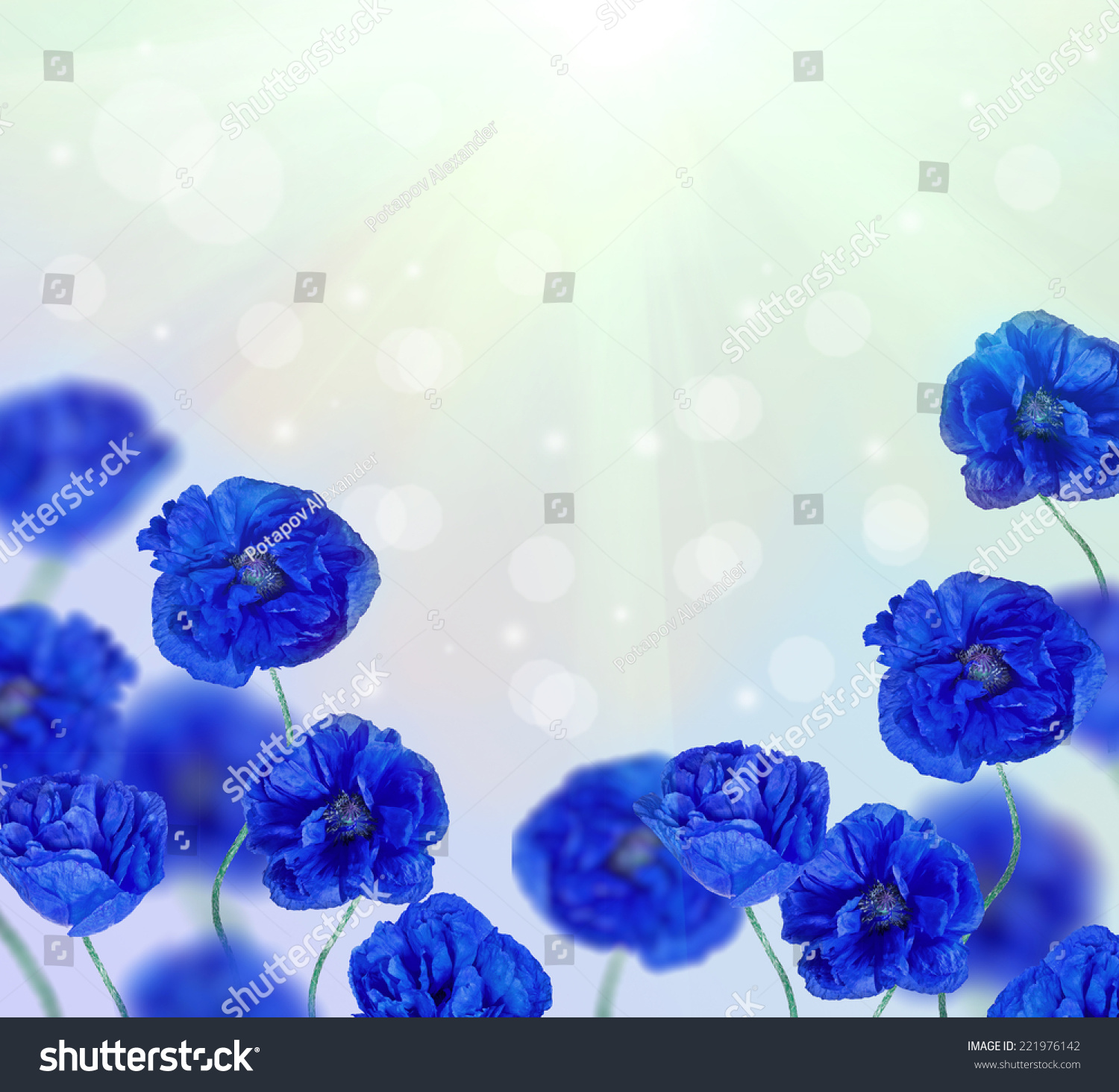 Blue Poppy Flowers Half Frame On Stock Photo Edit Now 221976142