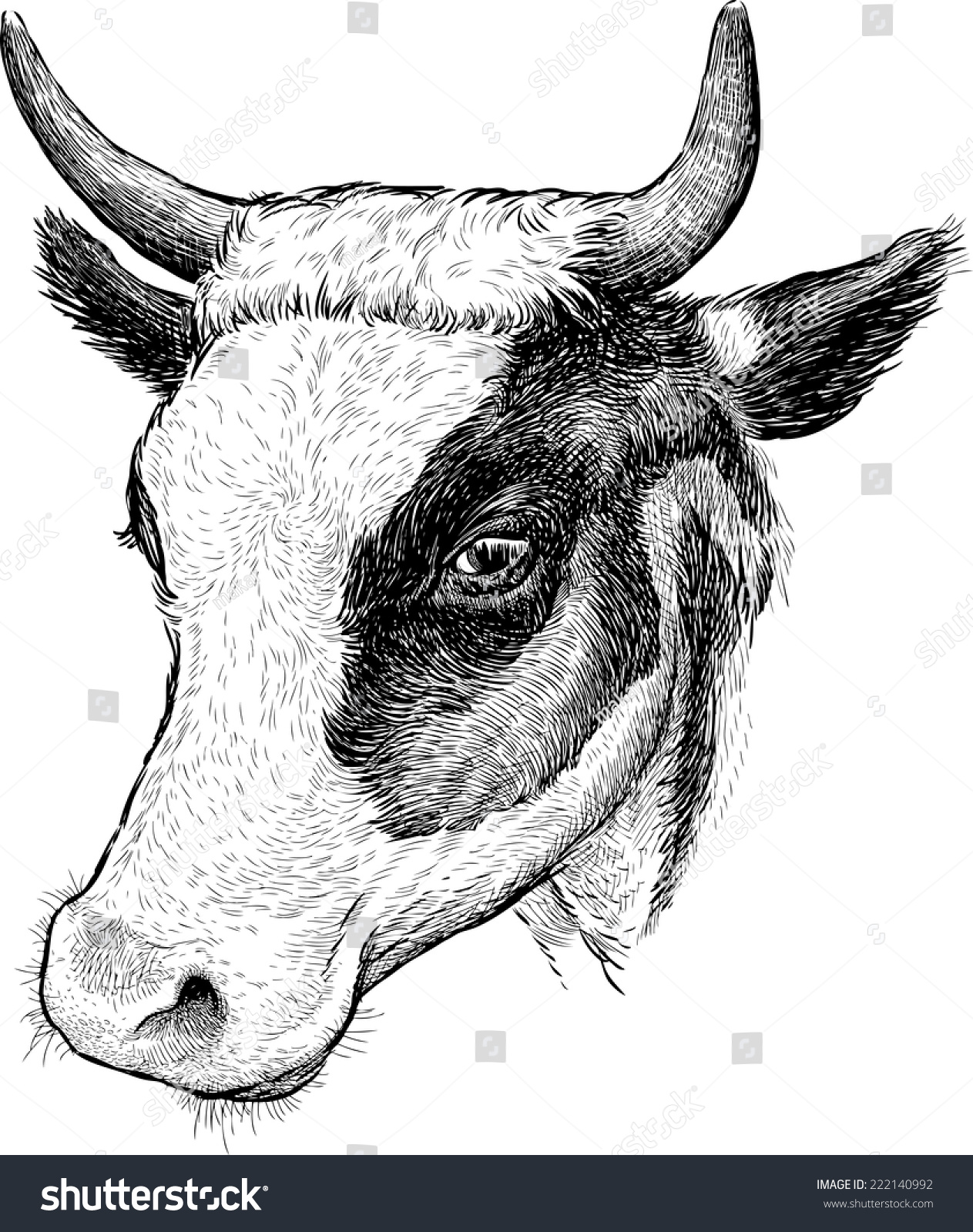 Uncategorized Cow Head Drawing cow head stock vector 222140992 shutterstock head