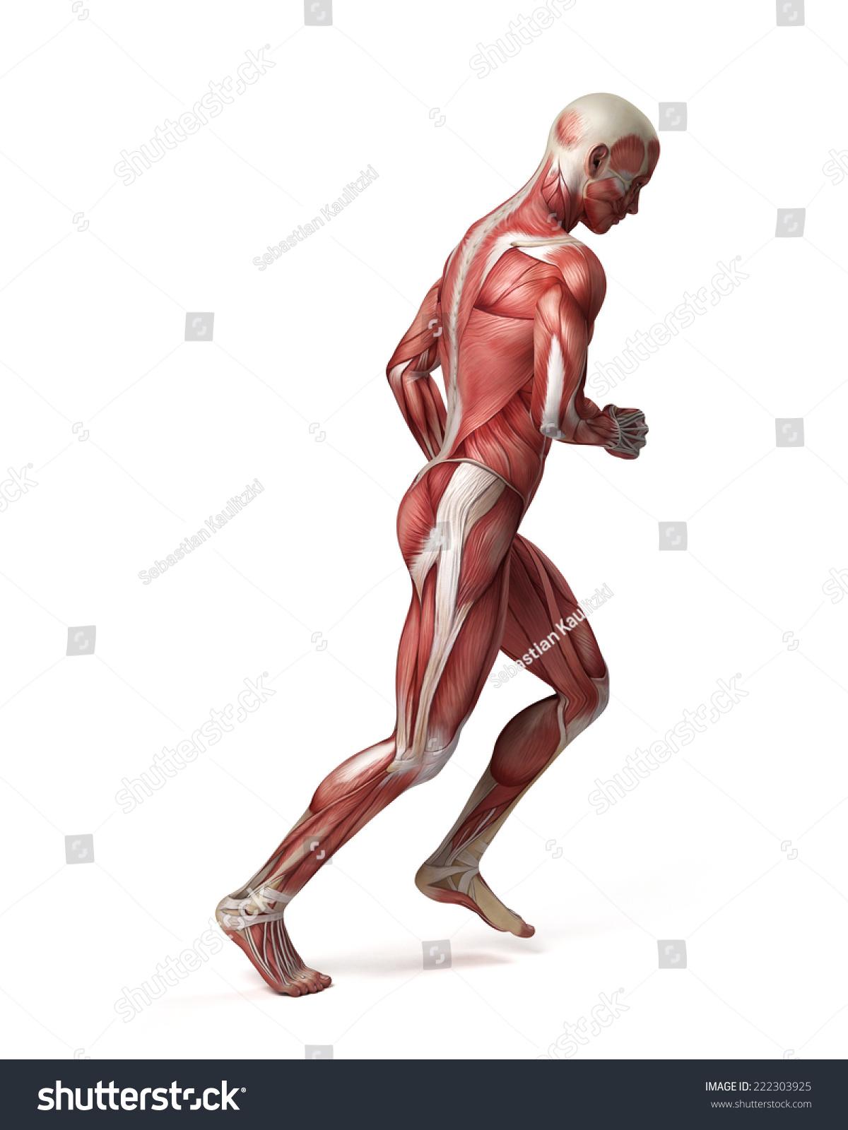3d Muscular System Of Running Man Ez Canvas